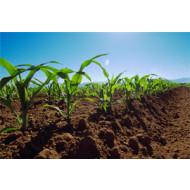 Биологическая защита растений от вредителей