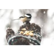 Животные на участке зимой