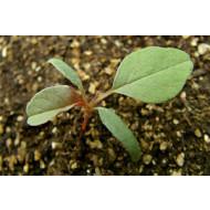 Новые технологии выращивания рассады
