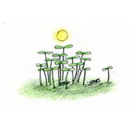 Проблемы выращивания рассады
