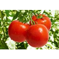 Болезни томатов, огурцов и перцев